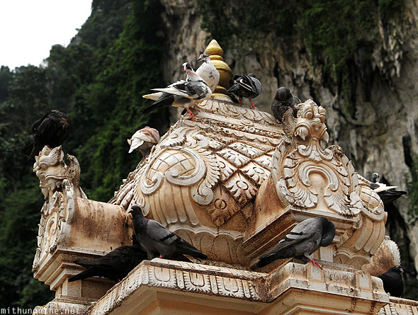 Batu Caves pigeons on top