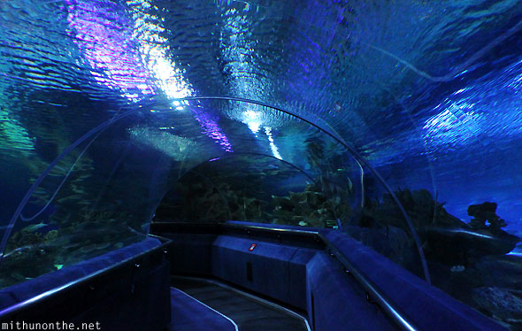 KLCC Aquaria inside underwater tunnel
