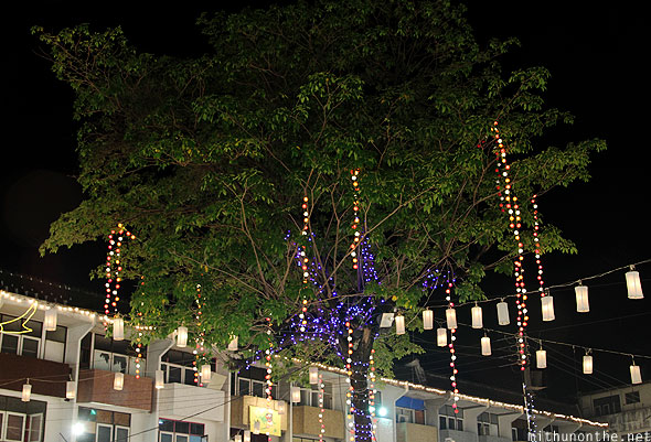 Chiang Mai night market light decorated tree