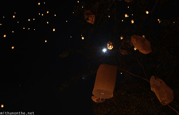 Maejo full moon Khomloy lanterns stuck in tree