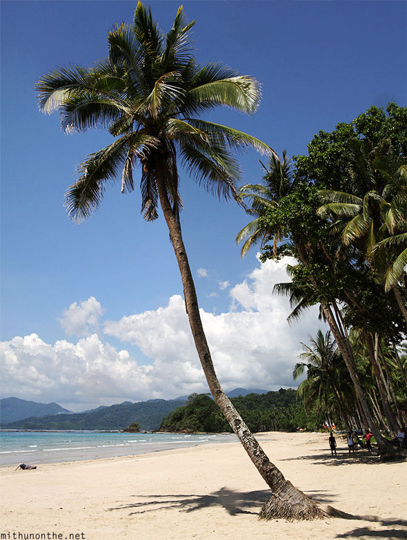 Sambang beach coconut tree panorama