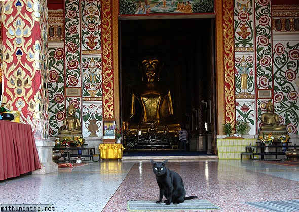 Black cat in front of Buddha statue
