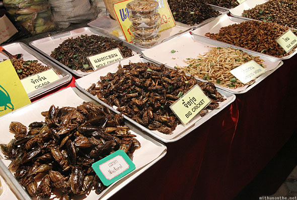 Chiang Mai fried insects vendor Thailand