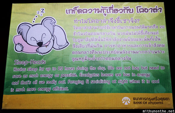 Chiang Mai zoo koala sleeping fact
