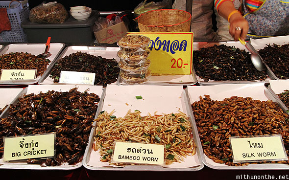 Fried insects cricket bamboo worm silkworm Chiang Mai