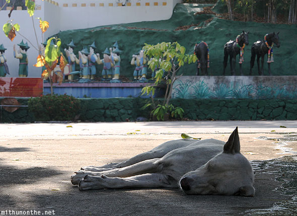 Chinese garden dog sleeping afternoon Pattaya