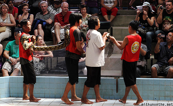 Cobra show python snake showing tourists Thailand