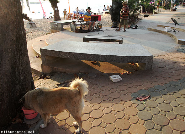 Jomtien beach stray dog Pattaya Thailand