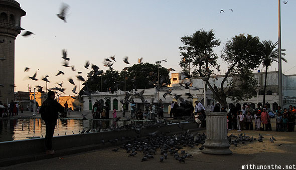 Mecca Masjid evening pigeon feeding Hyderabad