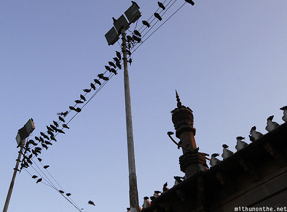 Mecca Masjid pigeons electric wires Hyderabad