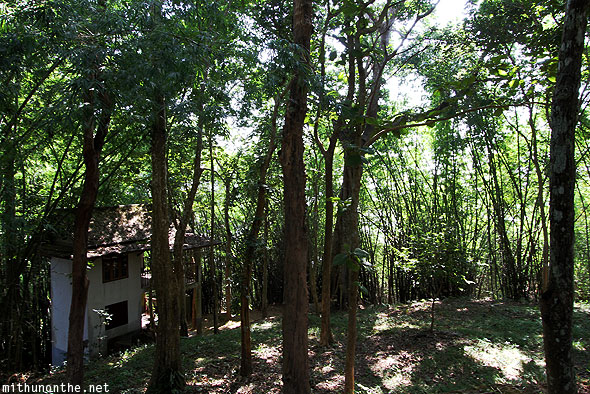 Wat Phra That Pu Khao forest trees Chiang Rai