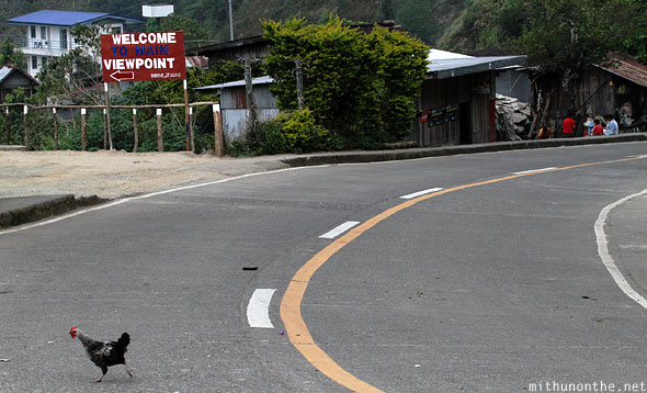 Banaue main viewpoint chicken crossing the road