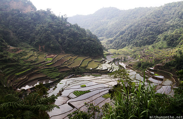Banaue rice terrace farm Luzon Philippines