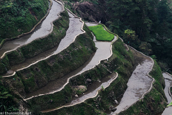 Banaue rice terrace farms wet fields