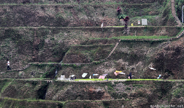 Banaue rice terrace level farms size
