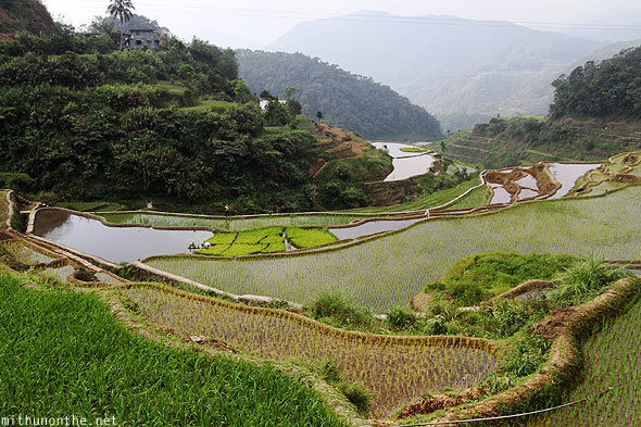 Banaue rice terrace small farm Philippines