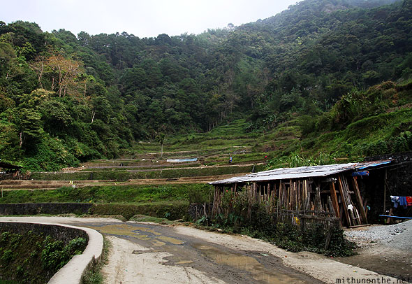 Banaue rice terrace small farm road Philippines
