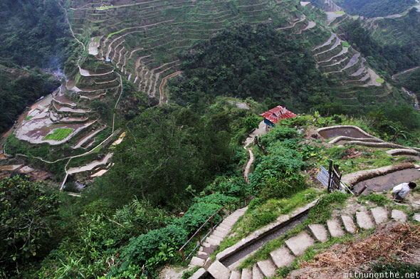 Banaue rice terrace steps down to house
