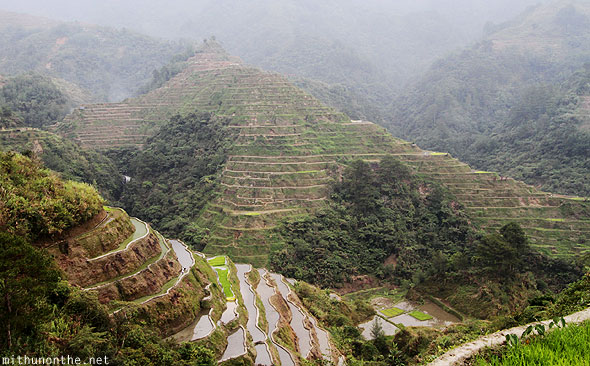 Banaue rice terrace wet farm