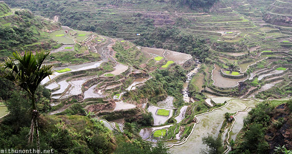 Banaue rice terrace wet farms