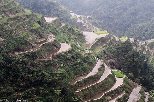 Banaue rice terrace wet fields