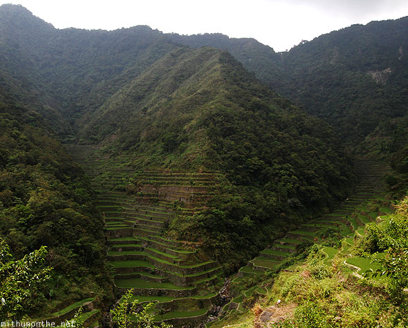 Batad valley rice terrace hill Banaue farms