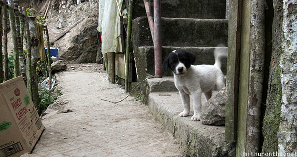 Batad viewdeck puppy dog Banaue Luzon
