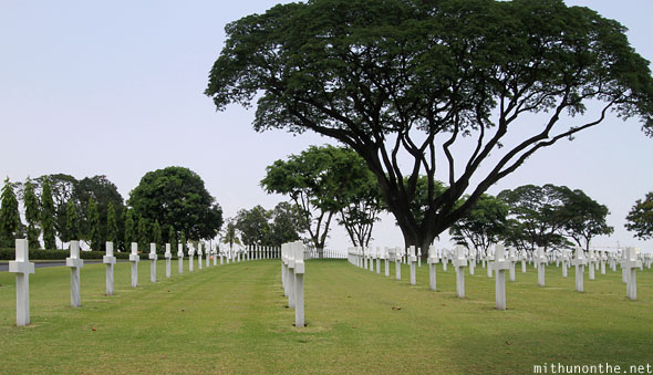 Manila American War Cemetery War Memorial big tree