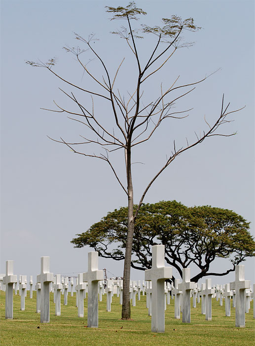 Manila American War Cemetery tree no leaves