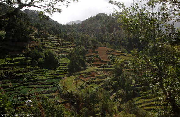 Mountain province rice terrace hill Philippines