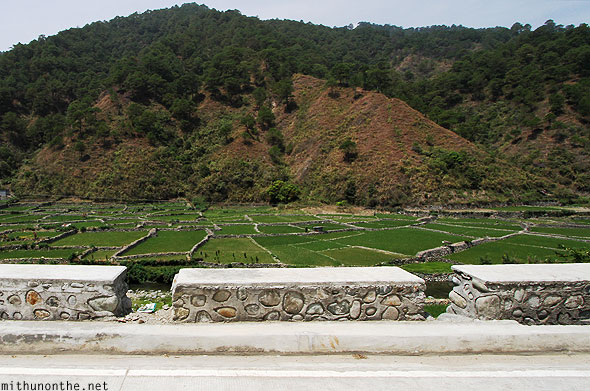 Rice paddy field outside Bontoc