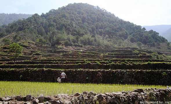 Rice terrace farmer Ifugao province Philippines