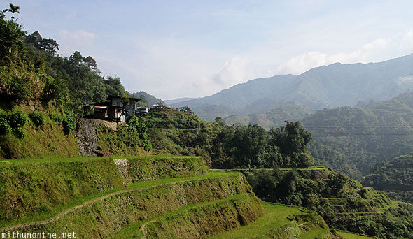 Rice terraces en route to Bontoc