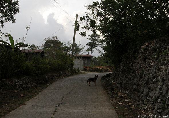 Sagada evening dog on road