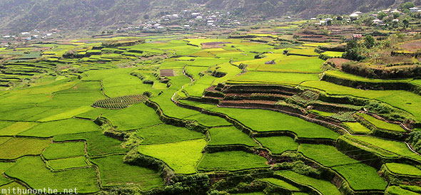 Sagada rice terrace farm green fields Philippines