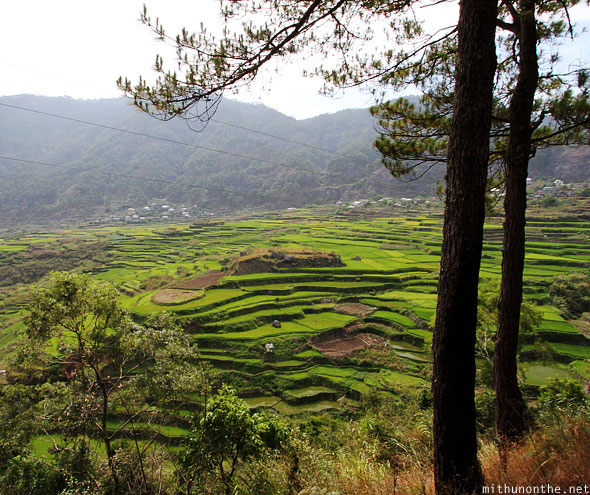Sagada rice terrace farm green hill