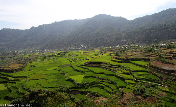 Sagada rice terrace farm Philippines