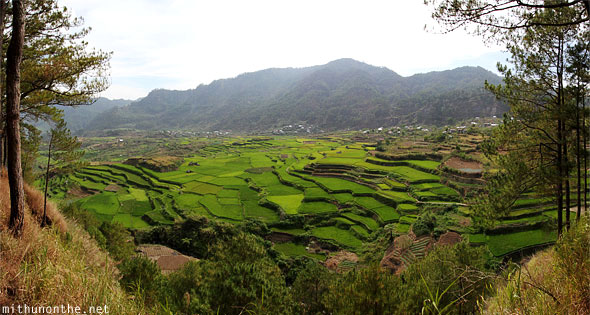 Sagada rice terrace Panorama
