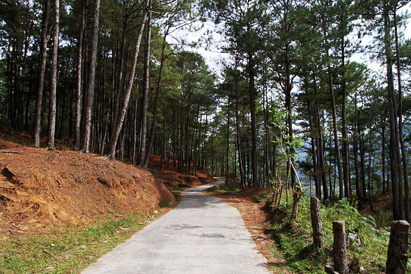 Sagada road to Sumaguing cave trees