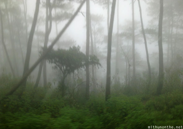 Sagada to Baguio misty morning forest trees