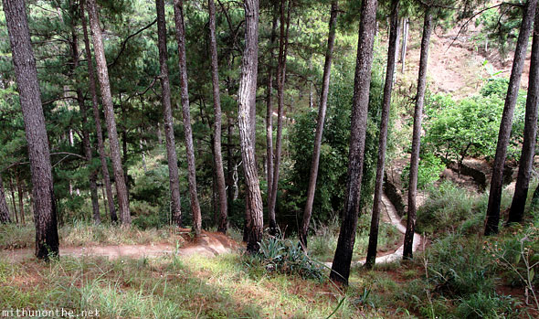 Sagada trail to Lumiang cave trees