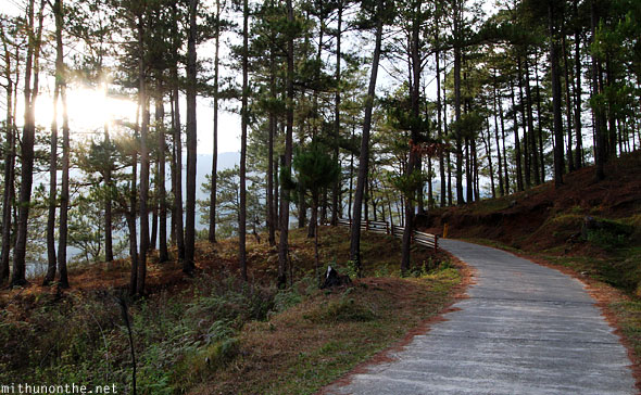 Sagada trek road trees evening