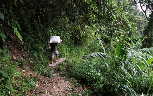 Villager carrying rice to Batad village Luzon