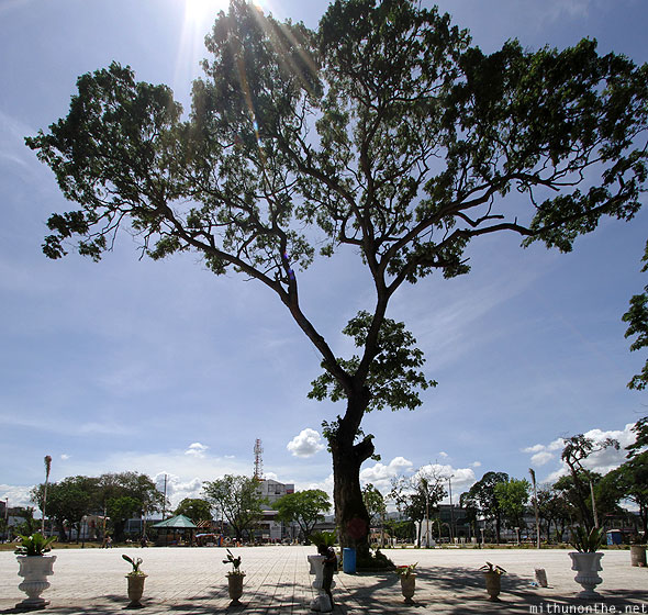 Cebu tree in front of Fort San Pedro