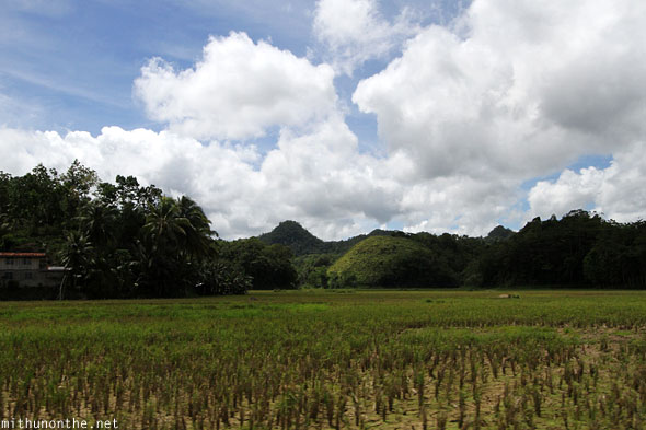 Chocolate hills single rice field Bohol Philippines