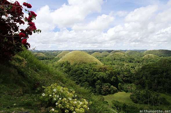 Chocolate hills view from steps Bohol