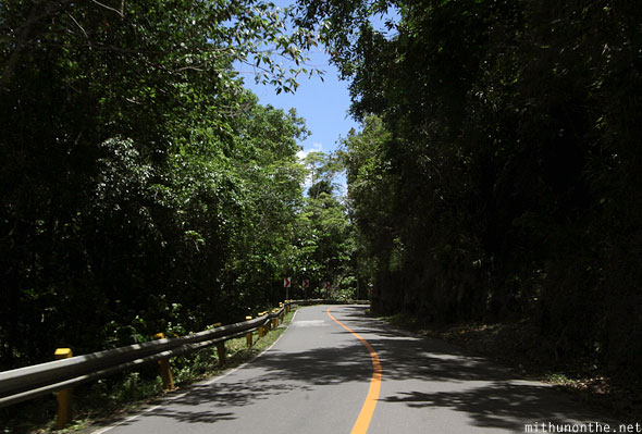 Entering manmade forest Bohol Philippines