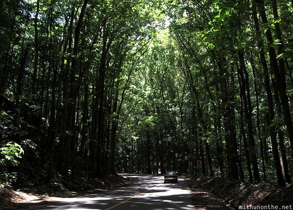 Manmade forest road Bohol Philippines