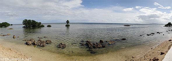 Bohol mangrove beach shore panorama