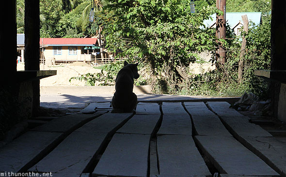 Dog sitting wooden planks El Nido Palawan